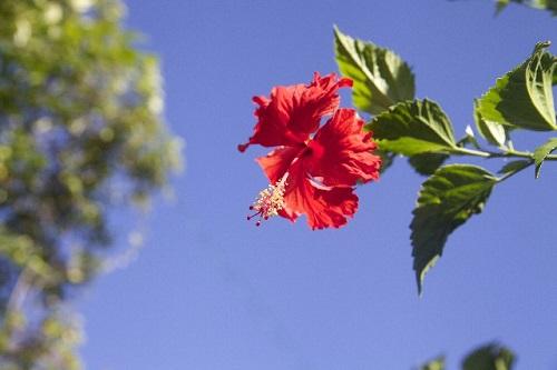 もっとハワイアンな雰囲気を味わうヒント